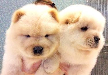 Vendor illegally selling puppies online exposed by Greater