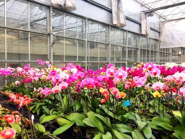 Orchid farmer allegedly flees to the US over debts