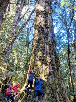 Team treks seven days to locate giant trees