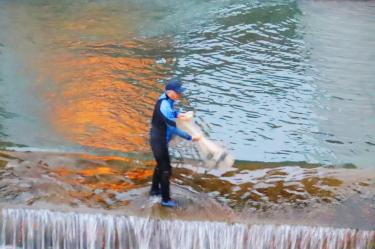 Biologist, students help fish over weir
