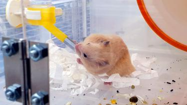Rodent rescue