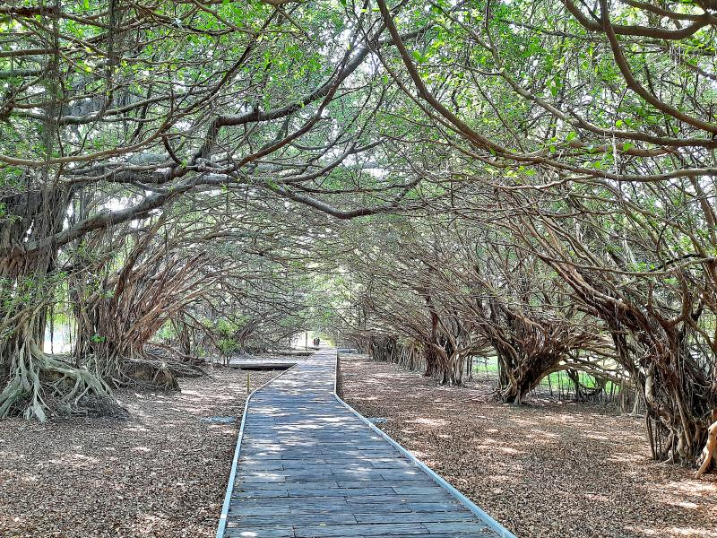 Highways and Byways: Under the banyan tree